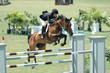 horse jumping a barrier