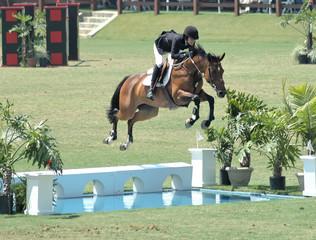 horse jumping a water barrier