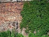 Fototapety wall