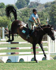 show horse landing