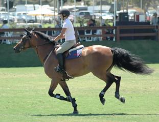 show horse & rider