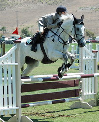 horse & rider jumping a barrier