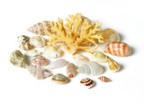 sea shell and coral isolated on white poster