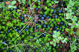 berries and moss poster