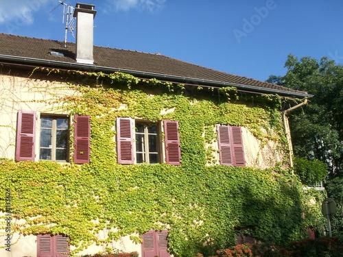 Lierre Sur Facade Facade Maison en Lierre