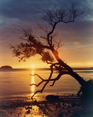 tree falling on sunset