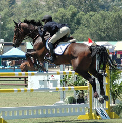 show horse jumping a barrier