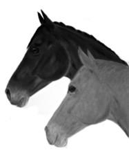 pastellzeichnung zwei pferdeköpfe