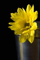 sun - flower