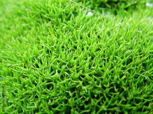 juicy green moss