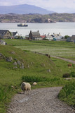 countryside in iona. poster