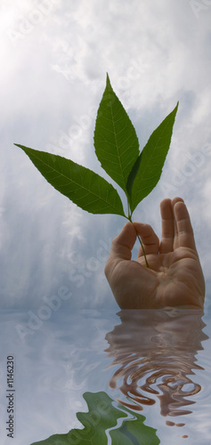 hand with leaves in water