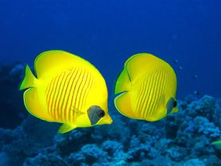 underwater couple
