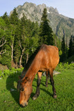 horse grazing in the mountains 2 poster