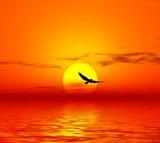 Fototapety red sunset. bird and sun