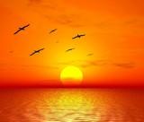 red sunset. flight of birds poster