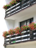 red blooming geranium on balcony poster