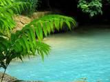 bassin turquoise et fougères poster