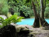 bassin turquoise fougères premier plan poster