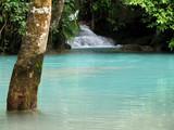 bassin turquoise et arbre immergé poster