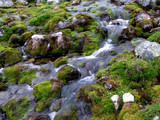 small mountain stream flowing poster