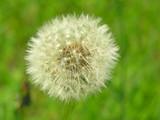 tender, gentle flower poster