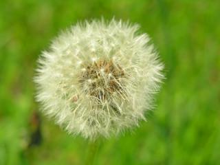 tender, gentle flower