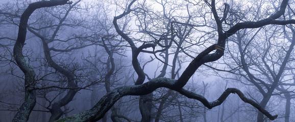 hexenbäume