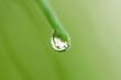 wassertropfen - drops and water 02