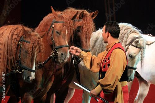 chevaux - 1167857