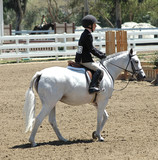 show pony and rider poster