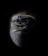 roleta: gorilla portrait