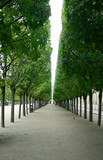 tree walkway poster