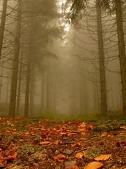 herbst schwarzwald im nebel