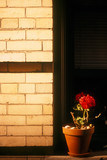 red flower on ledge in apartment building poster