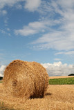 hay bale in harvested wheat field, denmark poster