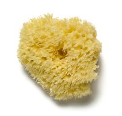 natural sponge on white