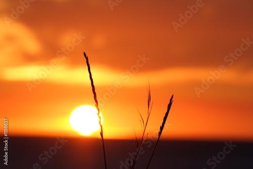 Obraz na Szkle coucher de soleil
