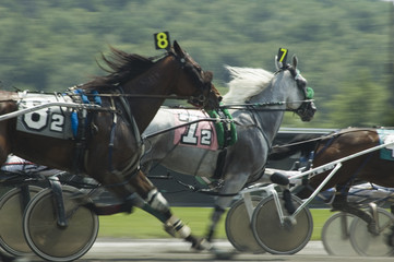 harness race-5