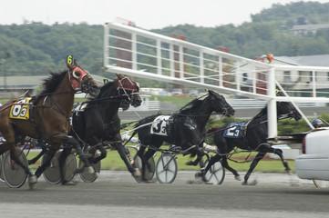 harness race-6