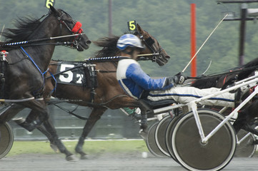 harness race-8