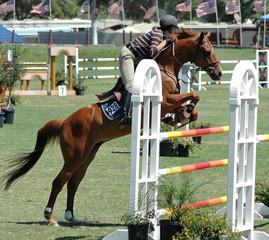 show horse & rider jumping a barrier