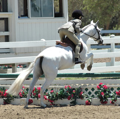 white show horse jumping barrier