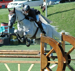 white show horse & rider jumping a barrier