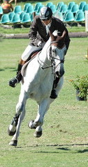 white show horse & rider
