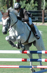 white show horse & rider jumping
