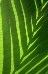 sombra de hojas