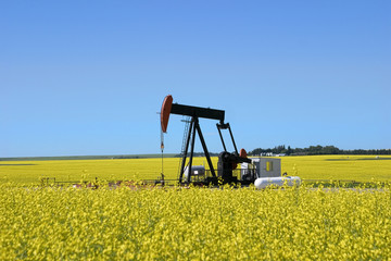 pump jack in a canola field
