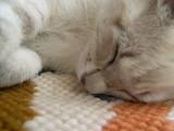 spící kotě