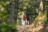 seniors trekking in the forest poster